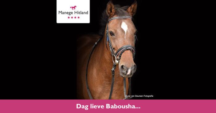 201905 ManageHitland-Babousha1