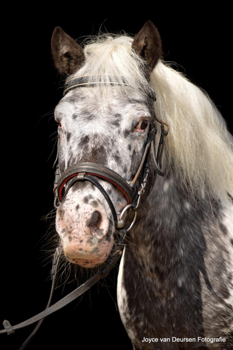Amber pony