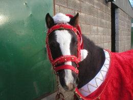 paard kerst