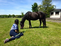 Manege Hitland ponykamp