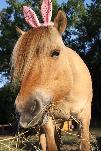 paard pasen
